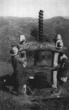 Pressoir à vis directe de Grande Kabylie (photo G. Laoust-Chantréaux).