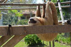 Eco-friendly travel tips #sloth #toucanrescueranch #traveltips #earthday