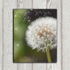 Dandelion photo print Green white Dandelion decor by DorindaArt, $5.00