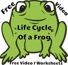 Free video lesson: Life Cycle of a Frog. Along with the video, I have also linked the Frog Life Cycle worksheets. Check them out both!