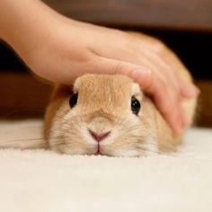 rabbit~