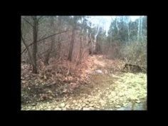 Bigfoot in Oldham County? You decide! Bigfoot Video, Bigfoot News, Bigfoot Footage, Mountain Monsters, Bigfoot Sightings, Ripley Believe It Or Not, Cryptozoology, This Or That Questions, Paranormal