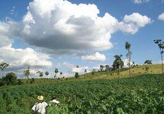 Turismo agropecuario, la nueva estrategia para promover al país   UltimaHora.com