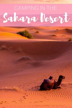 One of the most amazing experiences you have to do when visiting Morocco is camping in the Sahara Desert. There's nothing like riding camels and drinking mint tea at sunset.