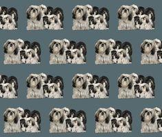 Rrrtibetan_terriers_shop_preview