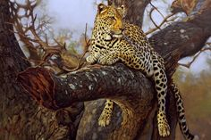 Wildlife artist, Lute Vink. (: also known as one of the best wildlife artists in the world and obviously in South Africa.  Also known as my dad ♥♥ Painting: Leopard on a tree branch