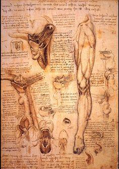 da Vinci anatomical studies