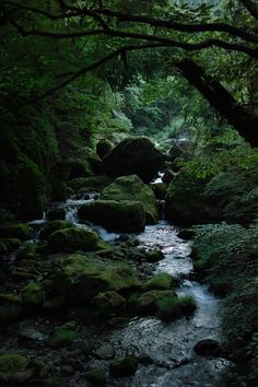 green mossy stream- This is just wonderful- my idea of heaven...