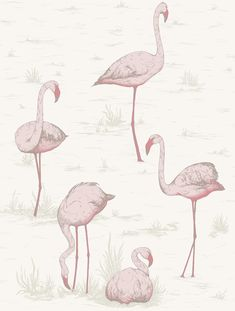 The Joyful Wallpaper Company WALLPAPER Flamingos Contemporary Restyled 95/8045 Wallpaper by Cole & Son