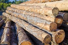 De-barked Radiata Pine (pinus radiata) stacked in the log yard of the Caboolture saw mill, owned and operated by CHH Wood Products in Queensland, Australia. For image licensing enquiries, please feel welcome to contact me at derekwalker73@bigpond.com  Cheers :)