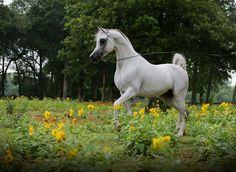 Now that's one gorgeous white horse.