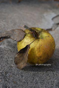 "Still Life Photography, Food Art, Nature Photography, Gray & Gold, Kitchen Decor, ""Apple Still Life I"", Rustic Farmhouse,  Earthy Natural"
