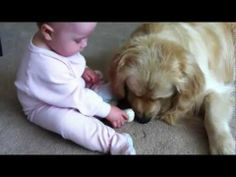 UPDATE: As I mentioned in the comments that I initially posted with this video, based on our dog's extensive training, temperament, and exceedingly gentle previous interactions with the baby (which are shown in our other videos), under our close supervision, we did not perceive that there was any realistic risk of harm to the baby by allowing he...