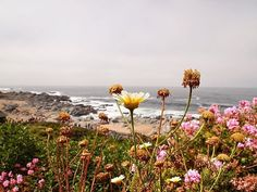 Desde Isla Negra...casa de Pablo Neruda #casapabloneruda . . .  #natureshots #naturelovers #nature#vsco #vscocam #livethelittlethings #liveauthentic #lifeofadventure #agameoftones #artofvisuals #thecuratedcollective #folkmagazine #exploretocreate #sunrays #colorful #sunlight #sonwelitt #nature_brilliance #neverstopexploring #plants#flowermagic #citylandscape #beach#beachlife #hallazgosemanal#nothingisordinary#justgoshoot#getoutside#islanegra