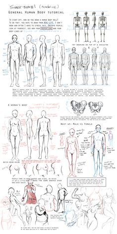 General Body Tutorial by shark-bomb.deviantart.com on @deviantART ✤ || CHARACTER DESIGN REFERENCES | Find more at https://www.facebook.com/CharacterDesignReferences if you're looking for: #line #art #character #design #model #sheet #illustration #expressions #best #concept #animation #drawing #archive #library #reference #anatomy #traditional #draw #development #artist #pose #settei #gestures #how #to #tutorial #conceptart #modelsheet #cartoon