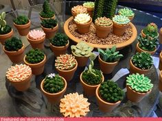 Succulent cupcakes (in every sense of the word!)