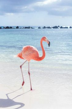 Pink Flamingo Wallpaper for iPhone and Android Beautiful Birds, Animals Beautiful, Animals And Pets, Cute Animals, Baby Animals, Jolie Photo, Fauna, Pink Flamingos, Flamingo Beach