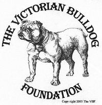 The Victorian Bulldog the enthical fit bulldog