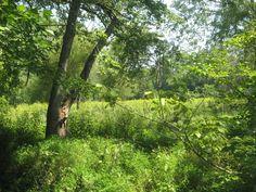 Monocacy Battlefield behind Gambrill Mill.