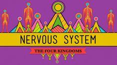 The Nervous System - Biology #26