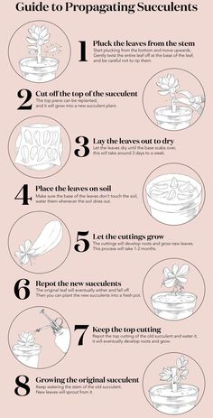 care tips Learn how to multiply your succulents ! - Gartenpflege -garden care tips Learn how to multiply your succulents ! Propagate Succulents From Leaves, How To Water Succulents, Types Of Succulents, Hanging Succulents, Cacti And Succulents, Watering Succulents, Propagating Cactus, Growing Succulents, Succulent Care