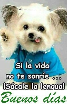 Good Morning Funny, Good Morning Greetings, Good Morning Quotes, Lovers Quotes, Types Of Food, Popular Culture, I Love Dogs, Mom And Dad, Teddy Bear