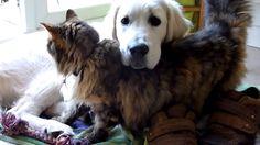 gato e cachorro se amam muito