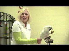 Teaching Parrots to Talk (Parrot Talking)