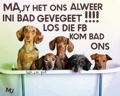 ... Afrikaans, Good Night Sleep Tight, Funny Quotes, Dachshunds, Noodles, Dogs, Candy, Humor, Funny Phrases