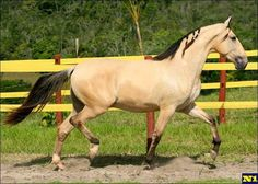 Horse Breeds - - Yahoo Image Search Results