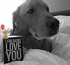 "Until Tuesday: A Wounded Warrior and the Golden Retriever Who Saved Him - Feb 5, 2015  ""I freaking love you"" — with Tuesday in New York."