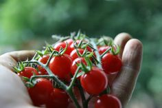 8 Tips for Growing A Greenhouse Organic Vegetable Garden