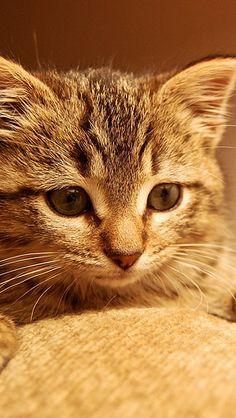 cat_kitten_paws_muzzle_eyes_striped