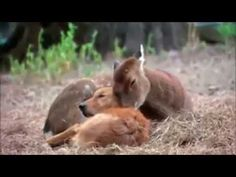 Cute animals everywhere  Friends Forever