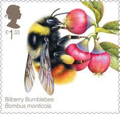 Bees £1.33 Stamp (2015) Bilberry Bumblebee (Bombus monticola)