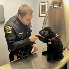 Little Puppy's first day on the job.