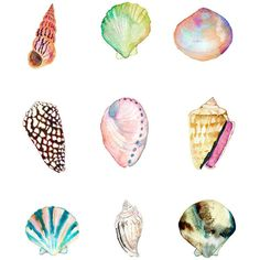 5 x 7 Shell Collection Print. Watercolor Sea Shells. Coastal Art. ($14) ❤ liked on Polyvore featuring home, home decor, wall art, seashell home decor and seashell wall art