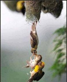 Amazing photo capture so amazing
