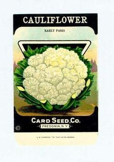 Vintage 1920's Seed packet for framing Cauliflower Card Seed Co Freedonia NY | eBay