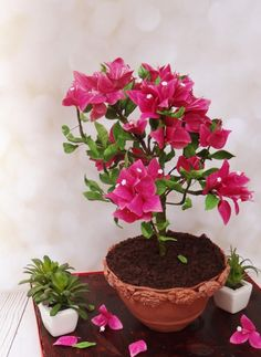 For the love of bougainvilleas!! - Cake by Prachi DhabalDeb