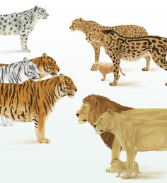 How to Draw Animals: Big Cats, Their Anatomy and Patterns - Tuts+ Design & Illustration Article