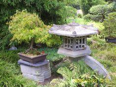 Bonsai Bonsai, South Africa, Bird, Outdoor Decor, Home Decor, Decoration Home, Room Decor, Birds, Home Interior Design