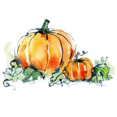 ripe orange two pumpkins with green leaves illustration