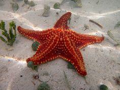 Starfish.. cutee