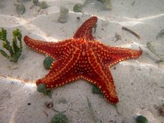 Starfish.. cutee