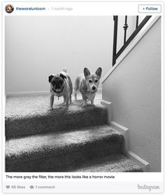 Author pets on Instagram = utterly adorable.
