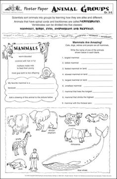 animal categories now advertise here vocabulary worksheets the animals animal groups 1st. Black Bedroom Furniture Sets. Home Design Ideas