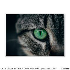 CAT'S GREEN EYE PHOTOGRAPHIC POSTER Eyes Wallpaper, Cat Photography, Photo Magnets, Aesthetic Iphone Wallpaper, Custom Posters, Green Eyes, Custom Framing, Art For Kids, Vibrant