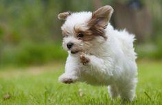 Cute puppy run