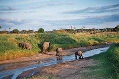 THE LAND OF SAVANNA ELEPHANTS